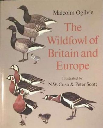 Malcom Ogilvie, The wildfowl of Britain and Europe, Oxford Univ. Press, 1982